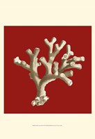 Small Coral on Red II (P) Fine-Art Print