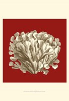 Small Coral on Red III (P) Fine-Art Print