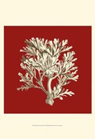 Small Coral on Red IV (P) Fine-Art Print