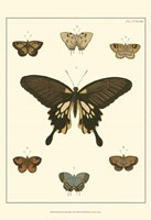 Small Heirloom Butterflies I (P) Fine-Art Print