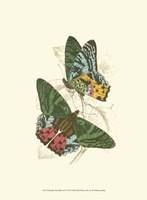 Butterflies III Fine-Art Print