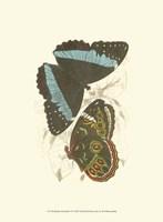 Butterflies VI Fine-Art Print