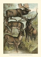 Johnson's Deer & Elk Fine-Art Print