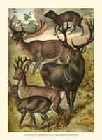 Johnson's Deer Fine-Art Print