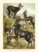 Johnson's Antelope Fine-Art Print