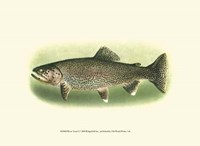 River Trout I Fine-Art Print