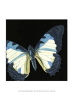 Small Dramatic Butterflies I Fine-Art Print