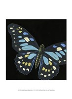 Small Dramatic Butterflies II Fine-Art Print