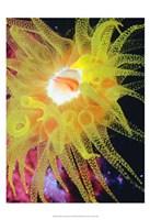 Graphic Sea Anemone II Fine-Art Print