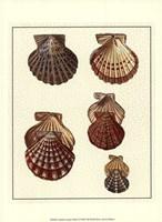 Crackled Antique Shells I Fine-Art Print