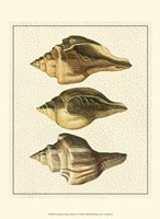 Crackled Antique Shells VI Fine-Art Print