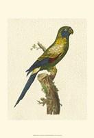 Crackled Antique Parrot I Fine-Art Print