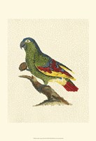Crackled Antique Parrot II Fine-Art Print