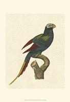 Crackled Antique Parrot III Fine-Art Print