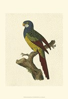 Crackled Antique Parrot IV Fine-Art Print