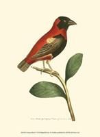 Crimson Birds I Fine-Art Print