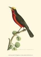 Crimson Birds II Fine-Art Print