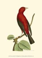 Crimson Birds III Fine-Art Print