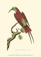 Crimson Birds IV Fine-Art Print