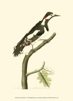 Crimson Birds V Fine-Art Print
