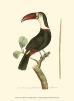 Crimson Birds VI Fine-Art Print