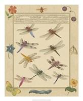 Dragonfly Manuscript III Fine-Art Print