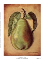 Williams Pear Fine-Art Print