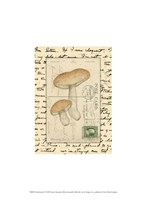 Mushrooms II Framed Print