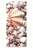 Shell Menagerie I Fine-Art Print