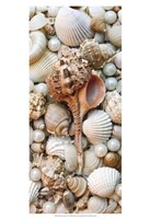 Shell Menagerie III Fine-Art Print