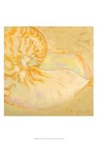 Shoreline Shells I Fine-Art Print