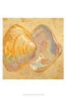 Shoreline Shells II Fine-Art Print