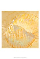 Shoreline Shells IV Fine-Art Print