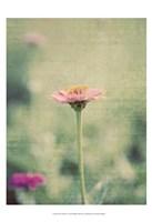 Flower Portrait IV Fine-Art Print