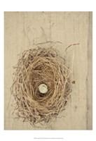 Nesting III Fine-Art Print