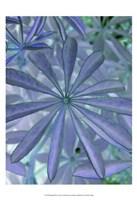 Woodland Plants in Blue I Fine-Art Print