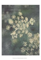 Queen Ann's Lace III Fine-Art Print