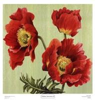 Chelsea Sensation II Fine-Art Print