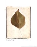 Single Leaf Fine-Art Print
