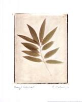 Bay Leaves Fine-Art Print
