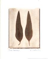 Two Leaves Fine-Art Print