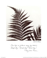 Delicate Ferns Fine-Art Print