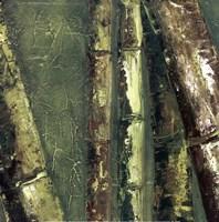 Bamboo Columbia I Fine-Art Print