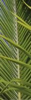 Palm Collection V Fine-Art Print
