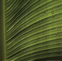 The Perfect Leaf II Fine-Art Print