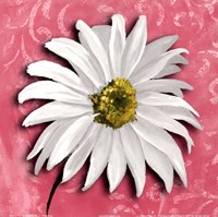 Blooming Daisy III Fine-Art Print