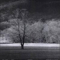 Cades Tree II Fine-Art Print