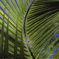 Palm Collection III Fine-Art Print