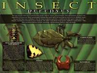 Insect Defenses Wall Poster