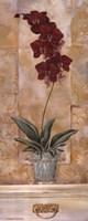 Orchid Panel II Fine-Art Print